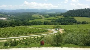 Florence sidecar tour - wine and food tour by sidecar in chianti - view over the vineyards