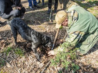 Truffle hunting experience with De Gustibus Wine and food tours