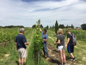 Chianti and Wine sidecar experience - lunch at Luiano winery in chianti Classico - de gustibus wine and food tours